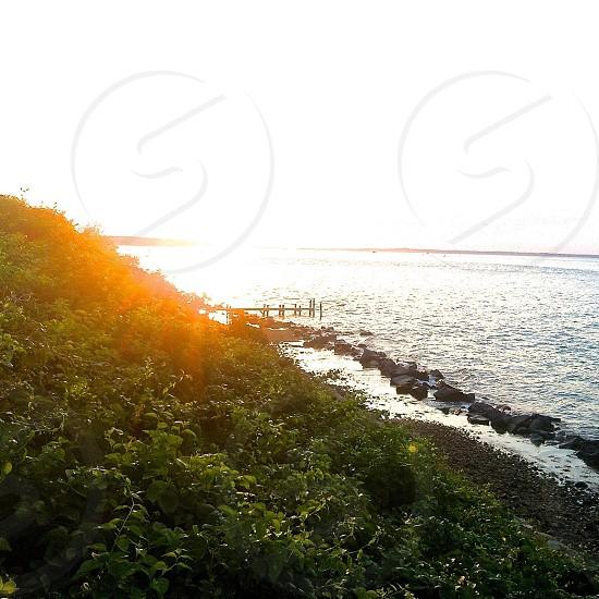 green grass near on sea shore photo