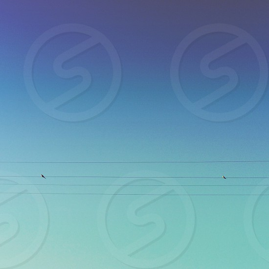 2 birds on electric wire line photo