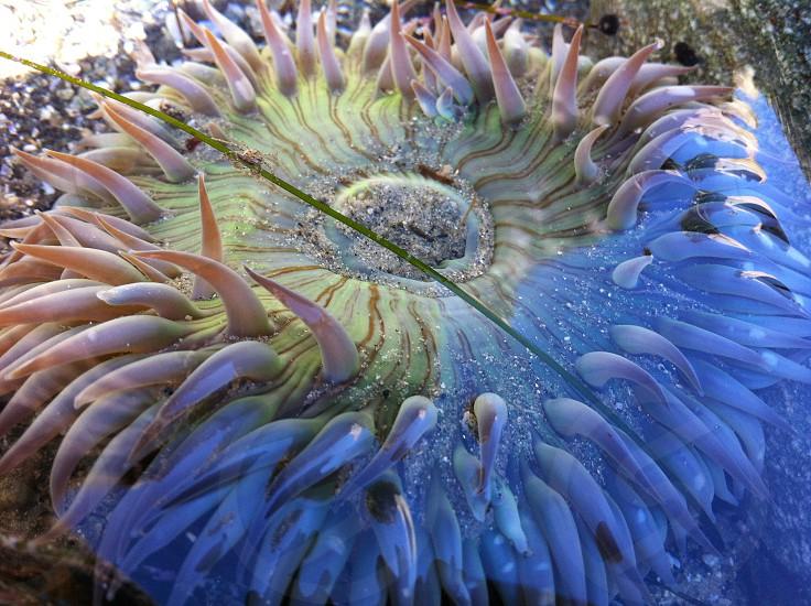 view of sea creature photo