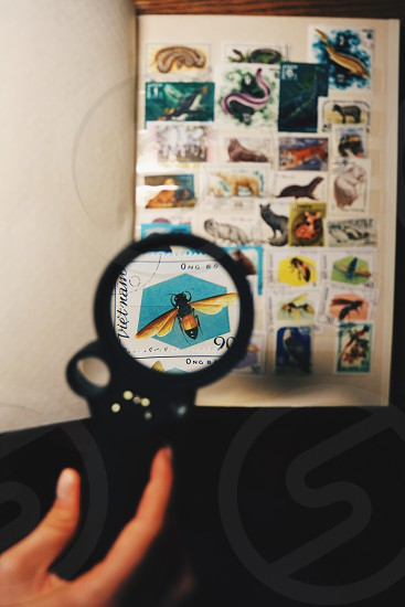 black and orange fly vietnam through magnifying glass photo