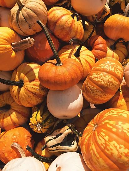 Pumpkins gourds harvest fall autumn halloween vegetables  photo