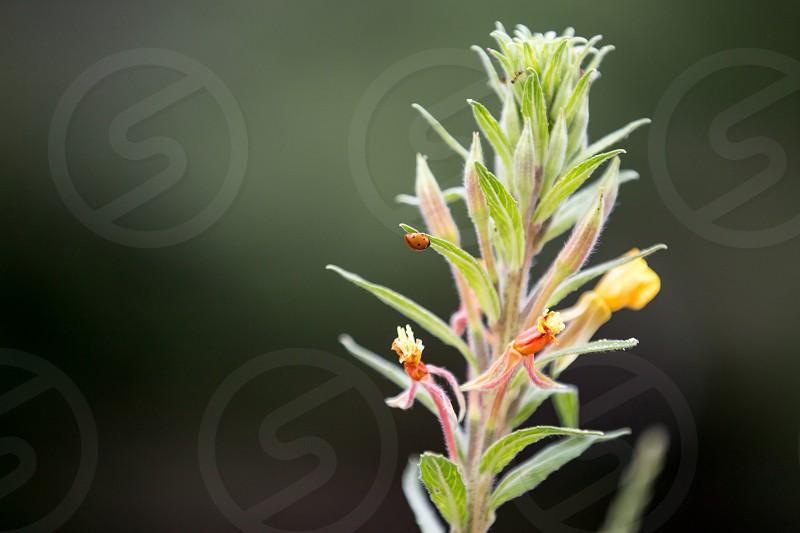 Insect ladybug ladybird plant close up flowers flower photo