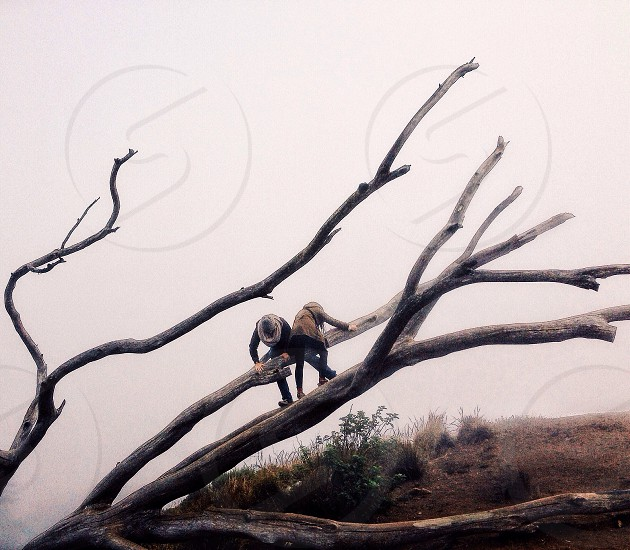 Trading Places....That SF Tree.....Mount Davidson Park.     San Francisco photo