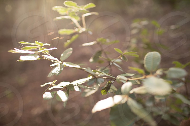 nature leaves green scenery sun magic light photo