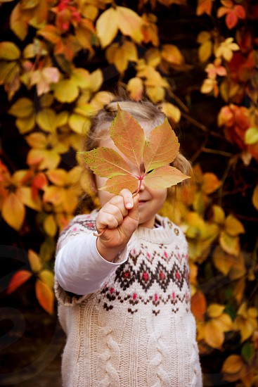 Little toddler girl in beautiful warm sweater holding colorful autumn leaf in front of her face shot on the streets of small town Sombor in northern Serbia. photo