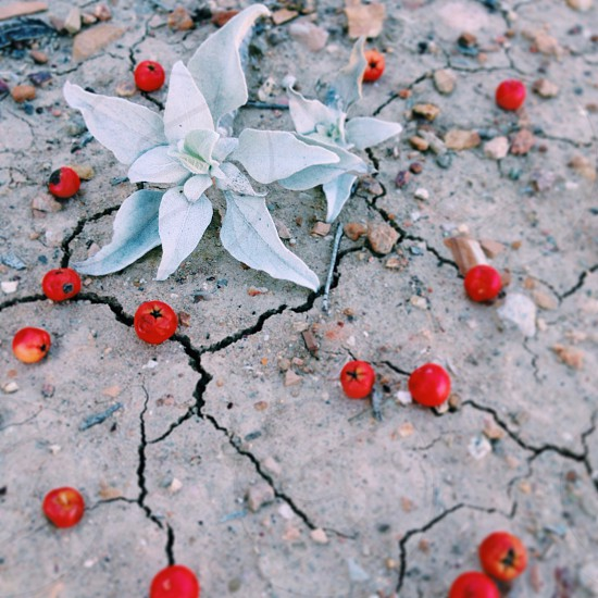 small red tomatoes photo