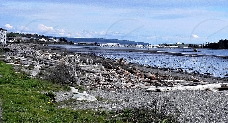 Driftwood Lovers Dream Whidbey Island Wa photo
