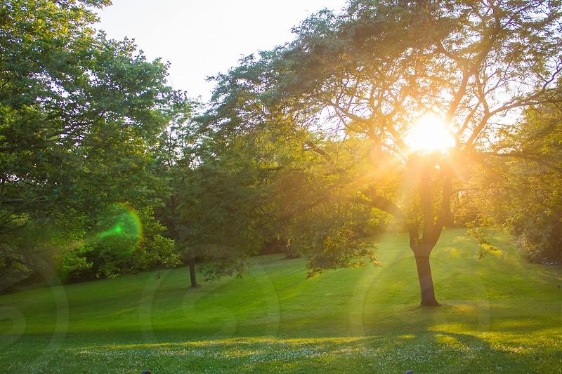 sunshine in tree photography photo