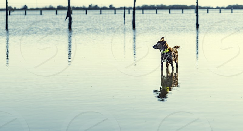 Wet dog breed with yellow necklace on the water with beautiful reflection and wave photo