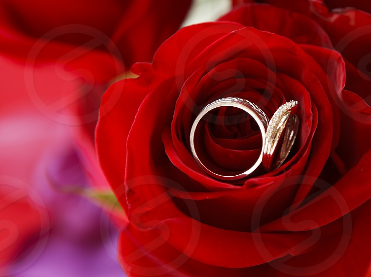Wedding Rings in Red Rose photo