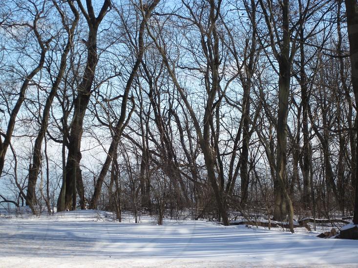 snow winter nature photo