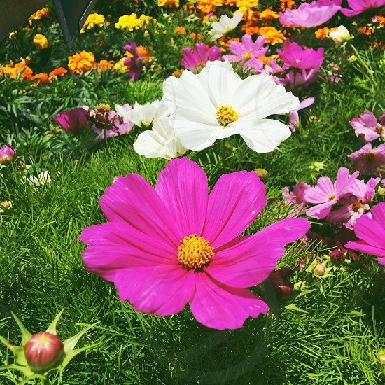 Summer spring color flowers floral nature plants natural light California green pink purple pretty photo