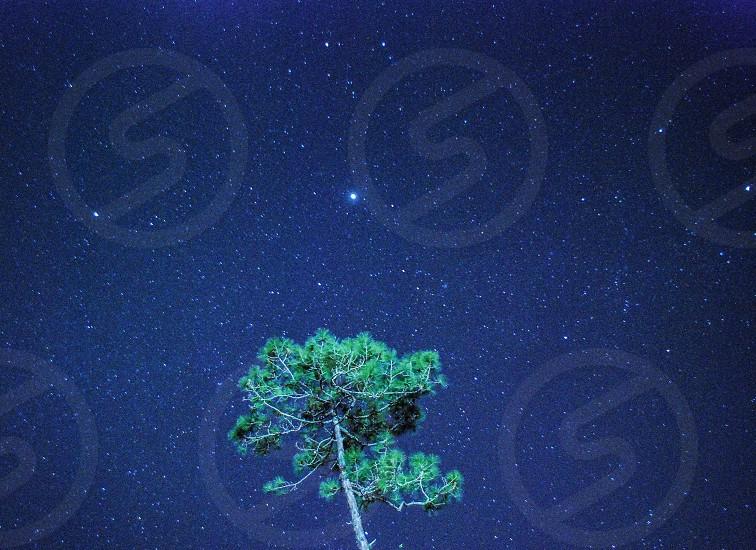 Night stars tree photo