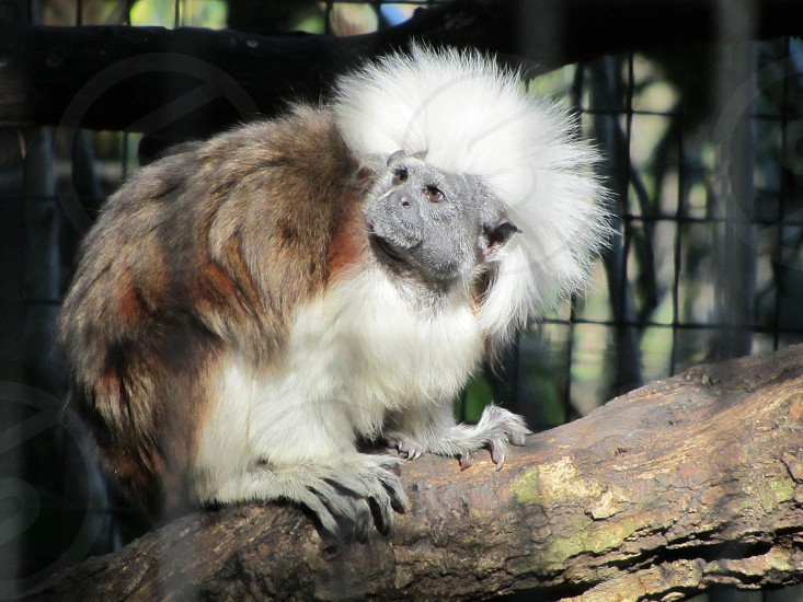 wee little monkey photo