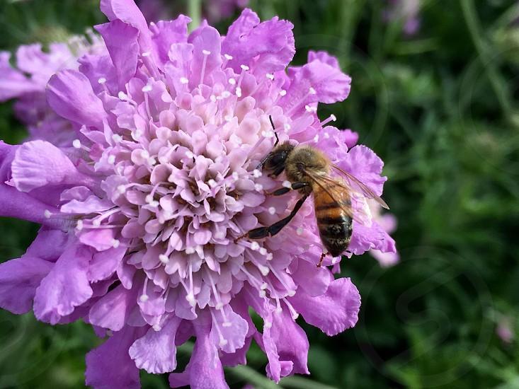 Flower bee pollination.  photo
