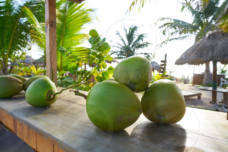 Mayan Riviera coconuts for drink in Caribbean Mexico photo
