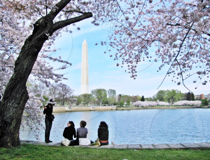 Cherry blossoms with friends photo