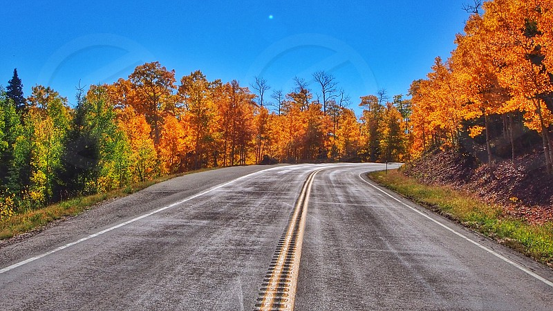 gray rolled asphalt road  and clear skies photo
