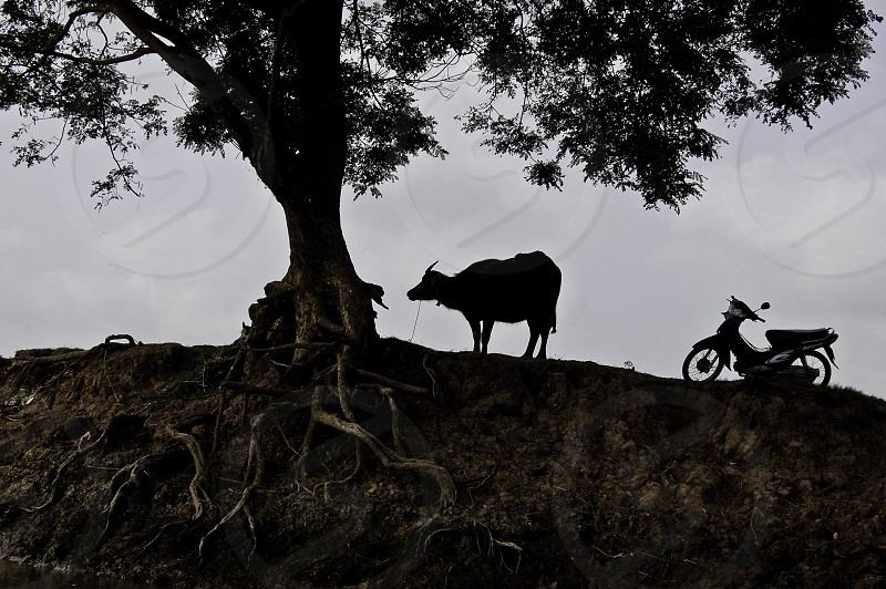 black water buffalo near tree photo