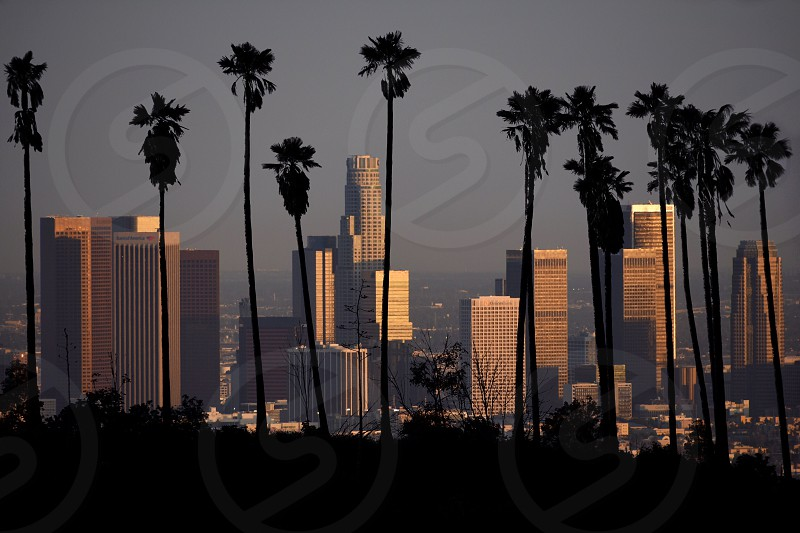 silhouette photography of palm trees behind cityscape photo