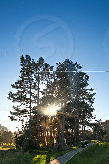 Sun flare through trees on golf course with blue sky. photo