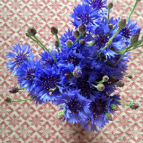 blue flower on vase photo