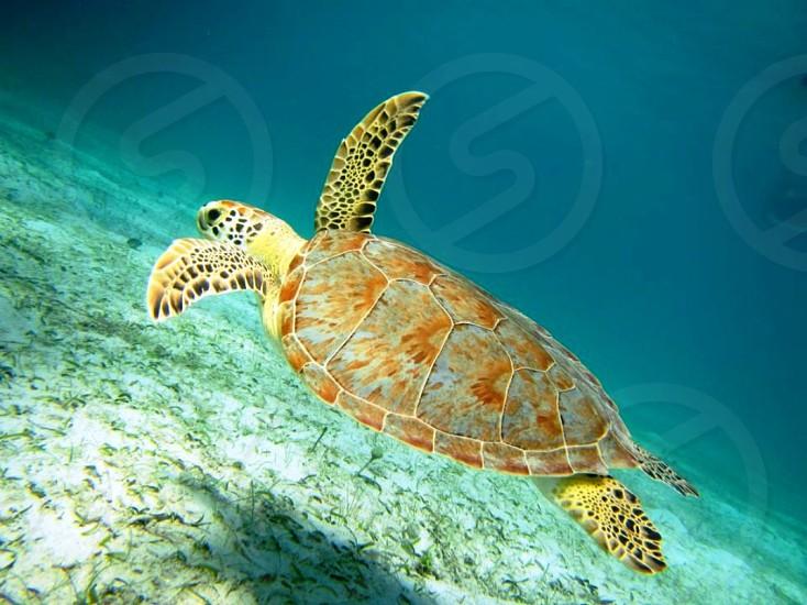Snorkeling off the coast of Culebra  photo