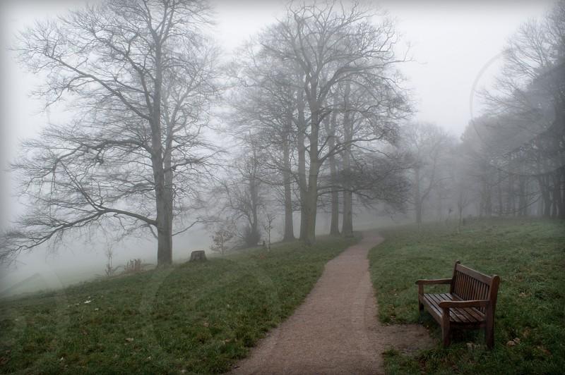 Misty •bfog • bench • wood • park • path photo
