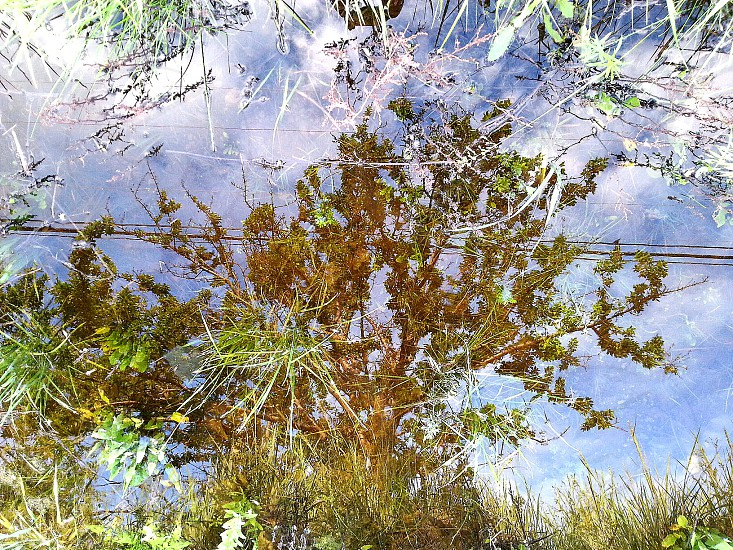 Reflection Tree tree Branches Reflection Sky Blue Clouds photo