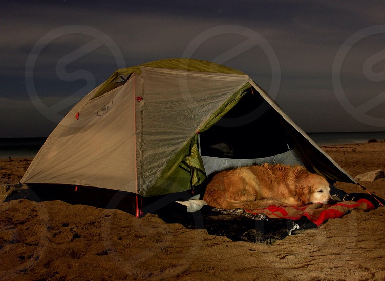 Camp camping tent stars star night beach sand water ocean dog pet animal nature outdoors outside pacific coast Malibu California golden retriever sleep sleeping photo
