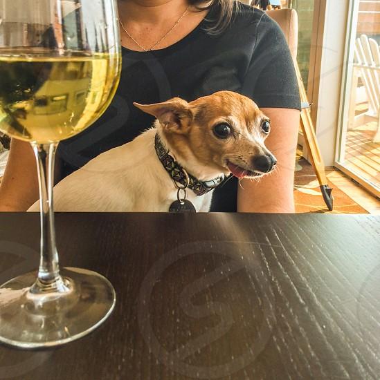 Tbt dog wants wine photo