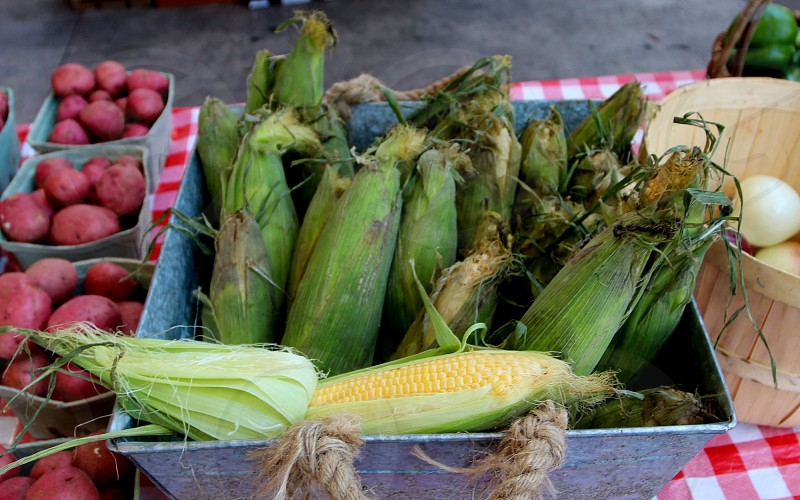 Corn in tin box at farmers market photo