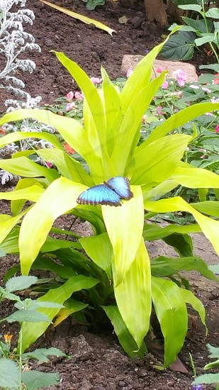In the Butterfly House in Sioux falls SD photo
