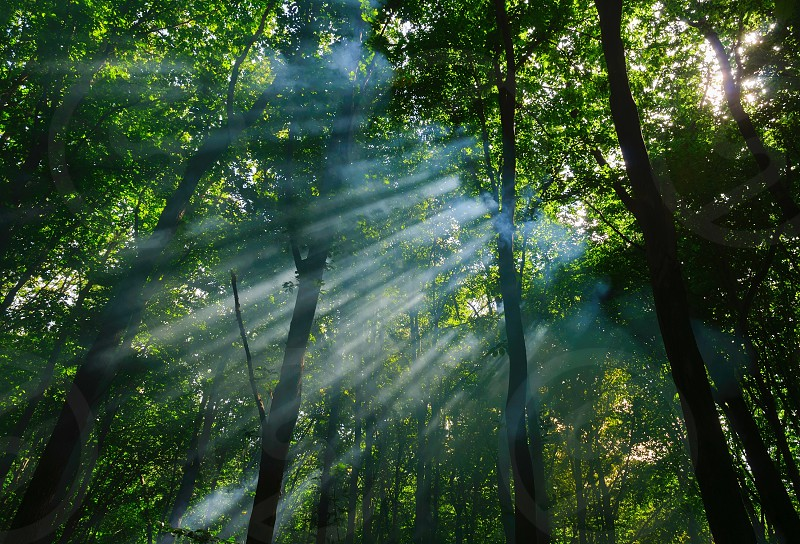 sunbeams in the forest photo