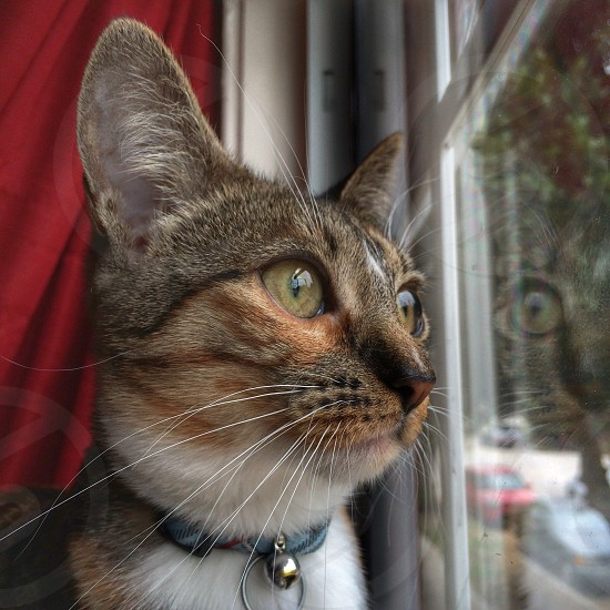 Cat watching looking eyes nose whiskers fur window color photo
