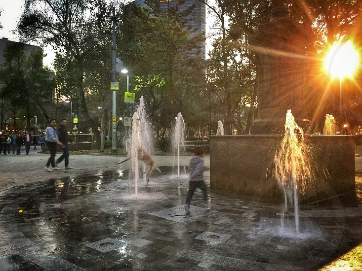 dog; dogs; pet; pets; fun;fountain; playing; wet; kid; happy; happiness; Mexico photo