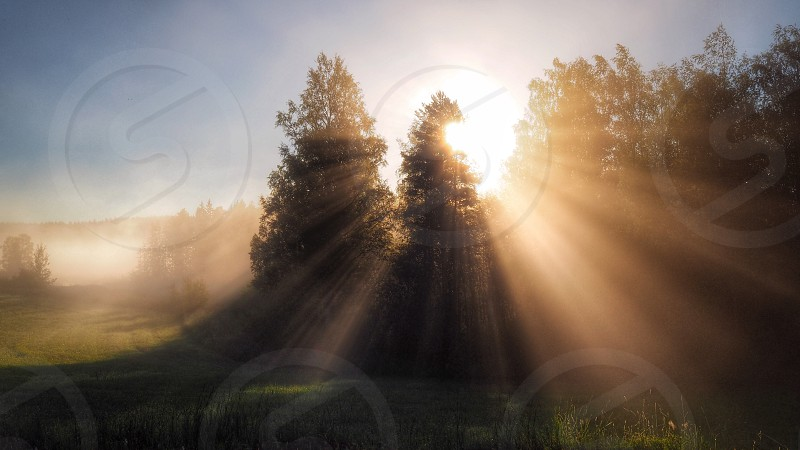 The sun is shining through the trees on a misty summer morning in Falun Dalecarlia Sweden countryside fog foggy beautiful landscape beautiful nature sunbeam enchanting tranquil calm mist sunrise photo