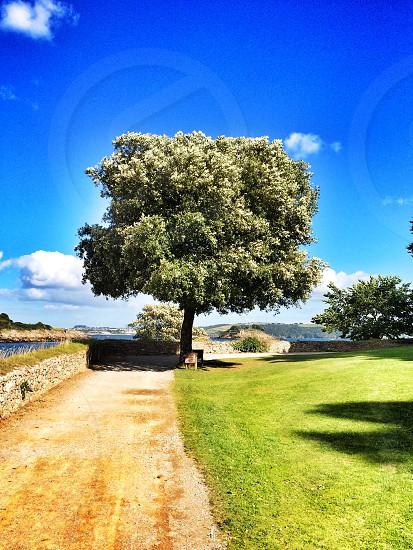 Coastal tree photo