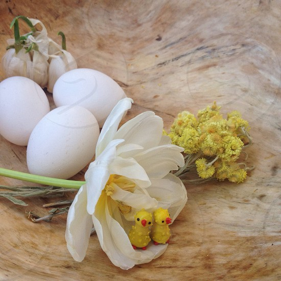 whtie flower yellow duck toys and white eggs photo