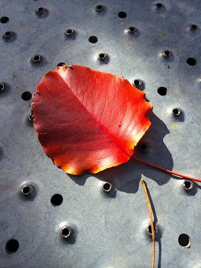 Leaves autumn red orange metal seasons photo