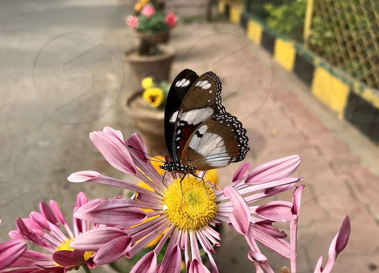 A beautiful butterfly sitting on a flower  photo