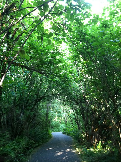 Green canopy of trees over trail photo