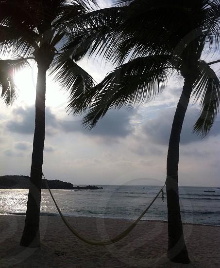 Hammock. Sunset. Paradise. Beach. Palm Trees.  photo