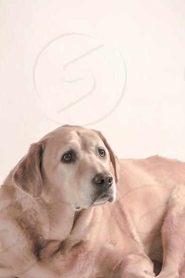 brown short hair medium breed dog photo