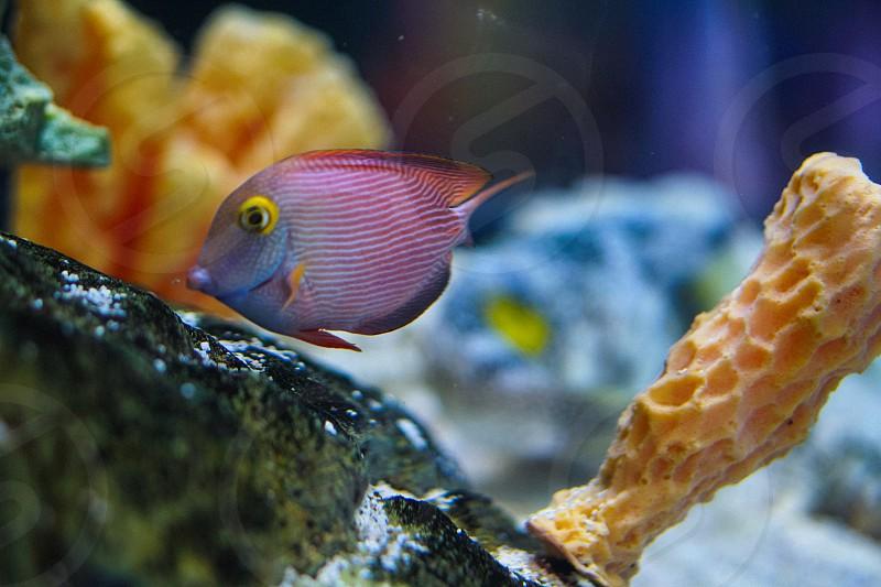 Aquarium Fish Beautiful Natural Candid Salt Water Coral photo