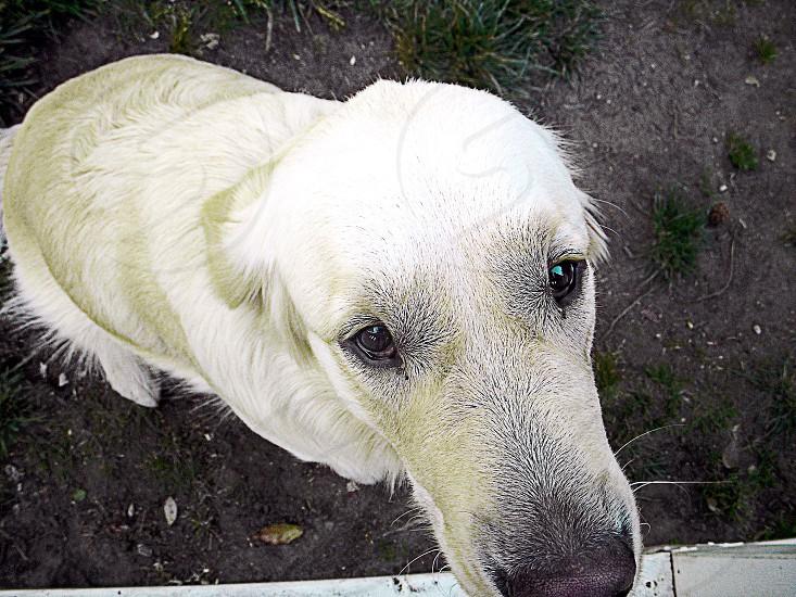 Puppy eyes.  photo