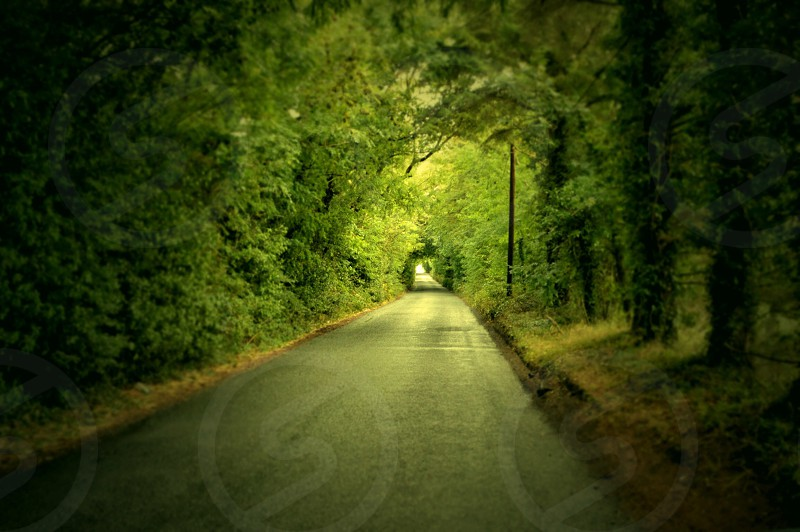 "Co. Meath  Ireland driving through these tunnels made of trees is like nothing else. Since the roads are usually only just a little wider than one car it's hard to find a spot to pull over for a good picture. This is how I picture "" a light at the end of the road"" saying.  photo"