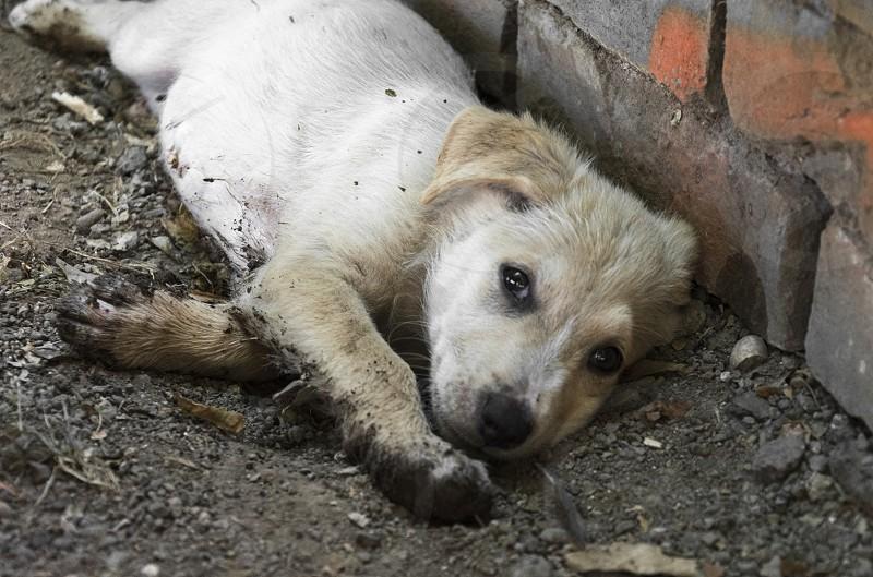 White puppy get dirty photo