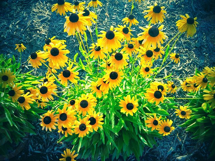 #wild #flowers #summer #beautiful #background photo