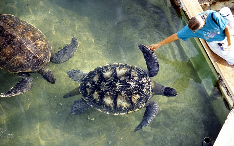 the turtle Farm near the Town of St Leu on the Island of La Reunion in the Indian Ocean in Africa. photo
